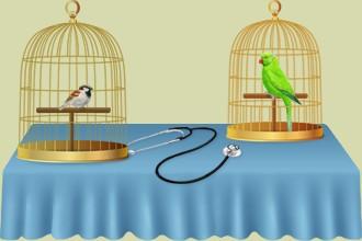 Ocúpate de estos pájaros en tu sala de cuidados y en tu clínica veterinaria, desarrolle tus capacidades al máximo con la ayuda de los otros criadores de pájaros en tu parque ornitológico...