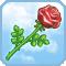 Rosa de Afrodita