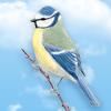 Skylar.D - Birdrama criador de pájaros