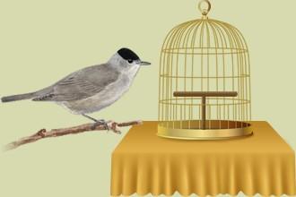 Los pájaros abandonados