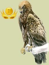 Clasificación de los criadores de pájaros por días de presencia